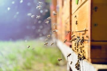 traceur GPS ruche
